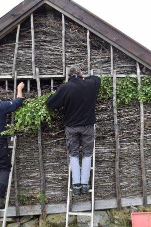 Riset sig saman etter kvart som det vert eldre. Då må ein etterfylla frå toppen. Her er det museumshandverkar Leif O. Svela og Øystein Egeland som legg ris i fasgardløa på Barstad.